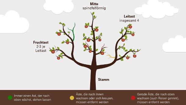 Wann Pflanzt Man Apfelbäume